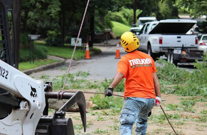 Arborist Consultations-Fayetteville Tree Trimming and Stump Grinding Services-We Offer Tree Trimming Services, Tree Removal, Tree Pruning, Tree Cutting, Residential and Commercial Tree Trimming Services, Storm Damage, Emergency Tree Removal, Land Clearing, Tree Companies, Tree Care Service, Stump Grinding, and we're the Best Tree Trimming Company Near You Guaranteed!