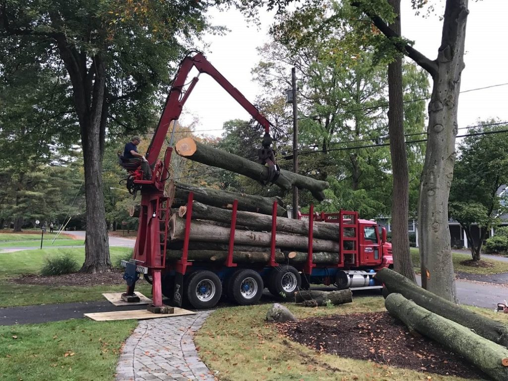 Commercial Tree Services-Fayetteville Tree Trimming and Stump Grinding Services-We Offer Tree Trimming Services, Tree Removal, Tree Pruning, Tree Cutting, Residential and Commercial Tree Trimming Services, Storm Damage, Emergency Tree Removal, Land Clearing, Tree Companies, Tree Care Service, Stump Grinding, and we're the Best Tree Trimming Company Near You Guaranteed!