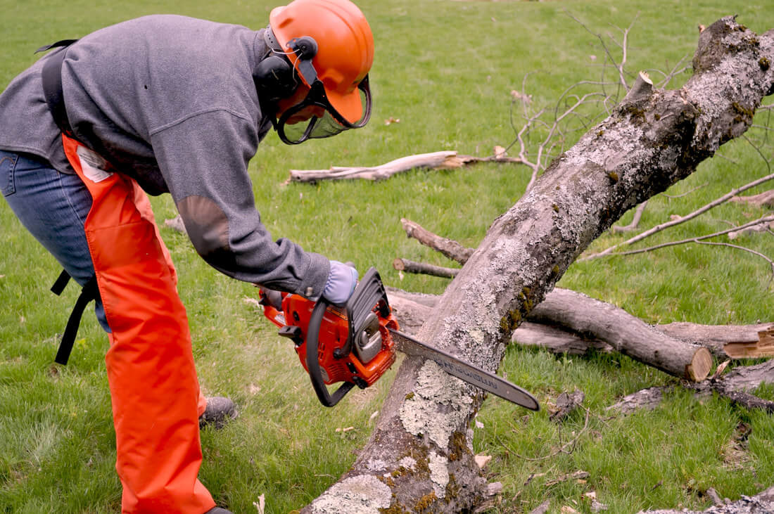 Emergency Tree Removal-Fayetteville Tree Trimming and Stump Grinding Services-We Offer Tree Trimming Services, Tree Removal, Tree Pruning, Tree Cutting, Residential and Commercial Tree Trimming Services, Storm Damage, Emergency Tree Removal, Land Clearing, Tree Companies, Tree Care Service, Stump Grinding, and we're the Best Tree Trimming Company Near You Guaranteed!