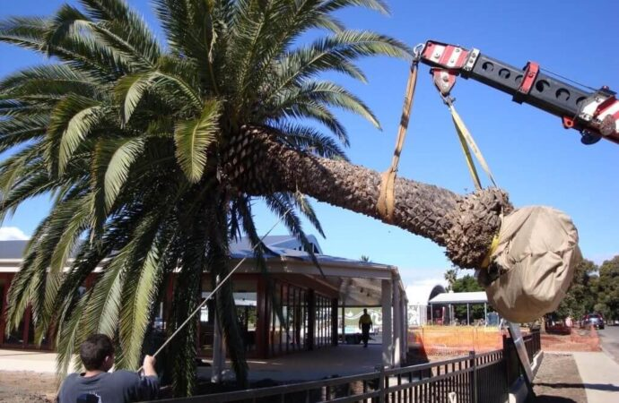 Palm Tree Removal-Fayetteville Tree Trimming and Stump Grinding Services-We Offer Tree Trimming Services, Tree Removal, Tree Pruning, Tree Cutting, Residential and Commercial Tree Trimming Services, Storm Damage, Emergency Tree Removal, Land Clearing, Tree Companies, Tree Care Service, Stump Grinding, and we're the Best Tree Trimming Company Near You Guaranteed!