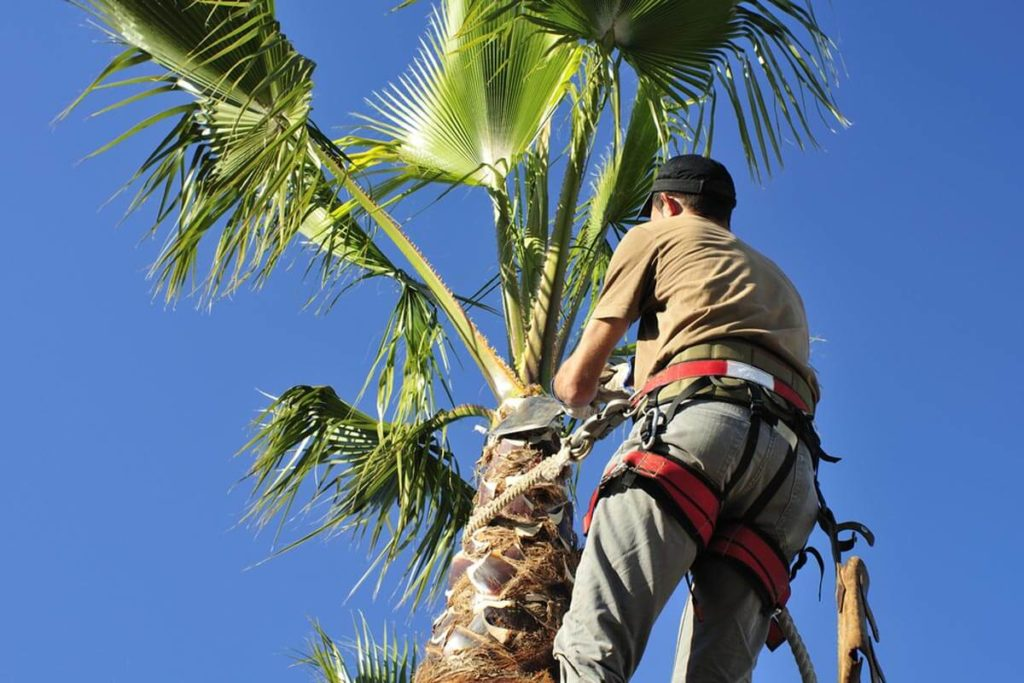 Palm Tree Trimming-Fayetteville Tree Trimming and Stump Grinding Services-We Offer Tree Trimming Services, Tree Removal, Tree Pruning, Tree Cutting, Residential and Commercial Tree Trimming Services, Storm Damage, Emergency Tree Removal, Land Clearing, Tree Companies, Tree Care Service, Stump Grinding, and we're the Best Tree Trimming Company Near You Guaranteed!