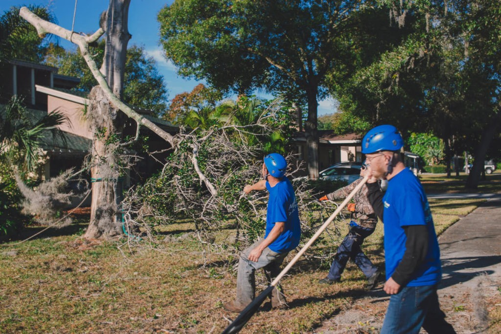 Residential Tree Services-Fayetteville Tree Trimming and Stump Grinding Services-We Offer Tree Trimming Services, Tree Removal, Tree Pruning, Tree Cutting, Residential and Commercial Tree Trimming Services, Storm Damage, Emergency Tree Removal, Land Clearing, Tree Companies, Tree Care Service, Stump Grinding, and we're the Best Tree Trimming Company Near You Guaranteed!