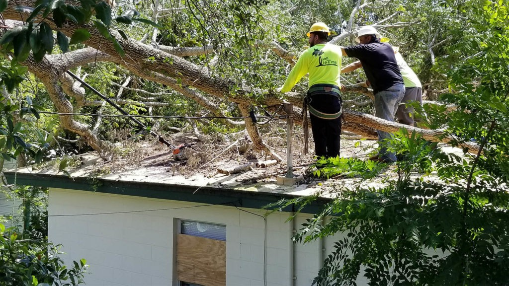 Storm Damage-Fayetteville Tree Trimming and Stump Grinding Services-We Offer Tree Trimming Services, Tree Removal, Tree Pruning, Tree Cutting, Residential and Commercial Tree Trimming Services, Storm Damage, Emergency Tree Removal, Land Clearing, Tree Companies, Tree Care Service, Stump Grinding, and we're the Best Tree Trimming Company Near You Guaranteed!