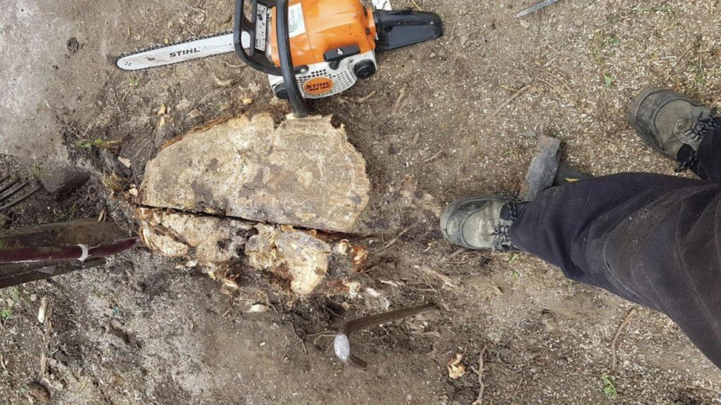 Stump Removal-Fayetteville Tree Trimming and Stump Grinding Services-We Offer Tree Trimming Services, Tree Removal, Tree Pruning, Tree Cutting, Residential and Commercial Tree Trimming Services, Storm Damage, Emergency Tree Removal, Land Clearing, Tree Companies, Tree Care Service, Stump Grinding, and we're the Best Tree Trimming Company Near You Guaranteed!