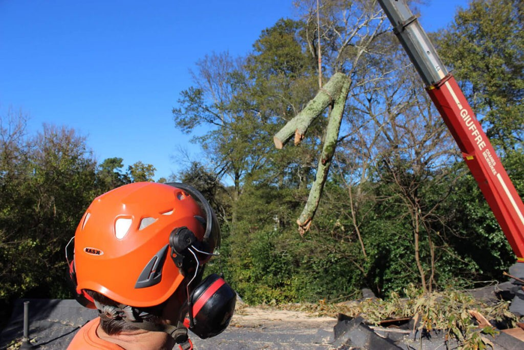 Tree Cutting-Fayetteville Tree Trimming and Stump Grinding Services-We Offer Tree Trimming Services, Tree Removal, Tree Pruning, Tree Cutting, Residential and Commercial Tree Trimming Services, Storm Damage, Emergency Tree Removal, Land Clearing, Tree Companies, Tree Care Service, Stump Grinding, and we're the Best Tree Trimming Company Near You Guaranteed!
