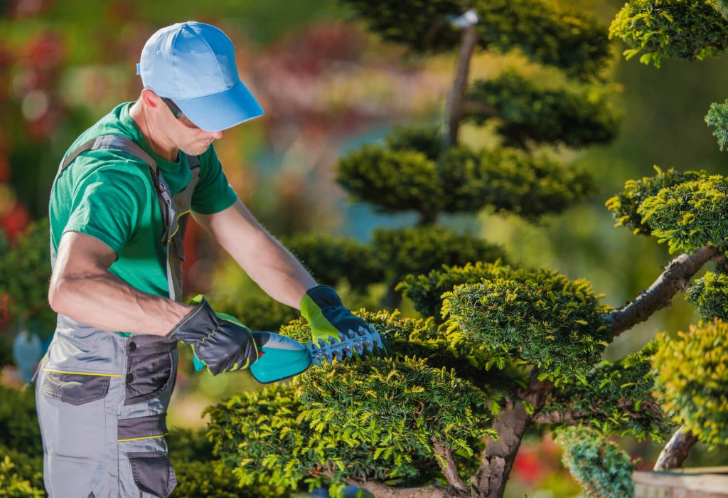 Tree Pruning-Fayetteville Tree Trimming and Stump Grinding Services-We Offer Tree Trimming Services, Tree Removal, Tree Pruning, Tree Cutting, Residential and Commercial Tree Trimming Services, Storm Damage, Emergency Tree Removal, Land Clearing, Tree Companies, Tree Care Service, Stump Grinding, and we're the Best Tree Trimming Company Near You Guaranteed!