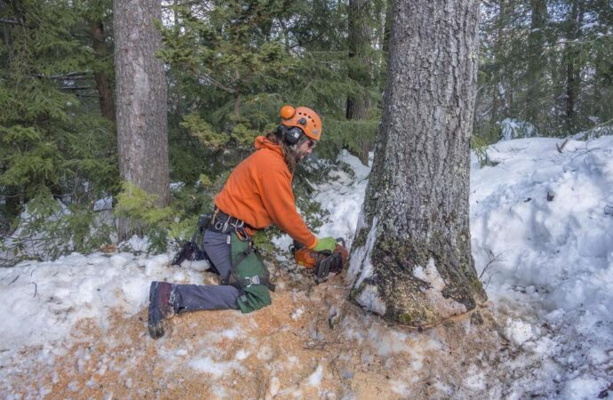 Tree Removal-Fayetteville Tree Trimming and Stump Grinding Services-We Offer Tree Trimming Services, Tree Removal, Tree Pruning, Tree Cutting, Residential and Commercial Tree Trimming Services, Storm Damage, Emergency Tree Removal, Land Clearing, Tree Companies, Tree Care Service, Stump Grinding, and we're the Best Tree Trimming Company Near You Guaranteed!