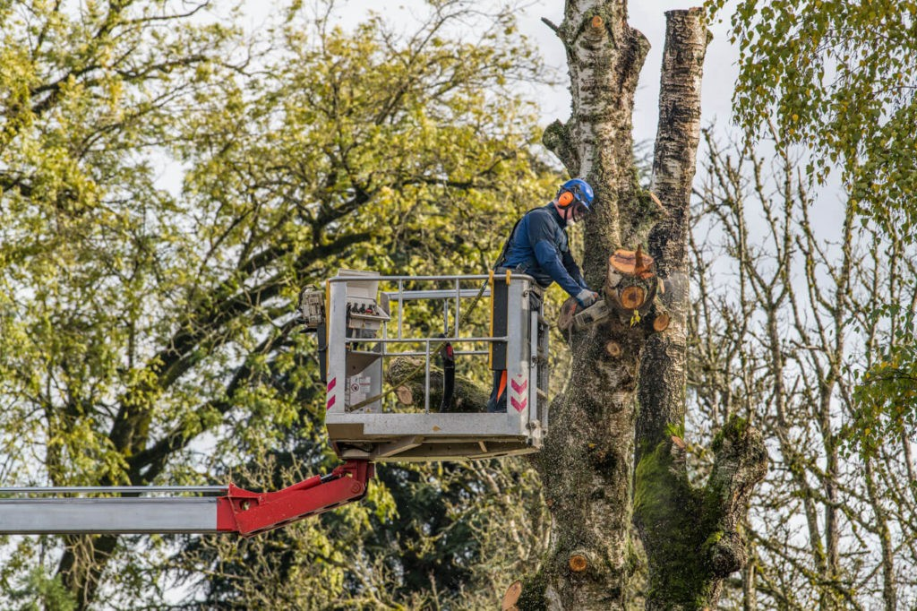 Tree Trimming-Fayetteville Tree Trimming and Stump Grinding Services-We Offer Tree Trimming Services, Tree Removal, Tree Pruning, Tree Cutting, Residential and Commercial Tree Trimming Services, Storm Damage, Emergency Tree Removal, Land Clearing, Tree Companies, Tree Care Service, Stump Grinding, and we're the Best Tree Trimming Company Near You Guaranteed!