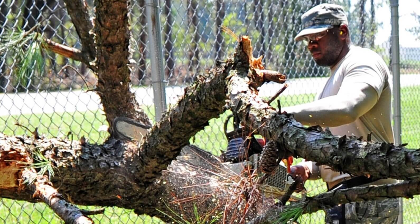 Fayetteville, North Carolina-Fayetteville Tree Trimming and Stump Grinding Services-We Offer Tree Trimming Services, Tree Removal, Tree Pruning, Tree Cutting, Residential and Commercial Tree Trimming Services, Storm Damage, Emergency Tree Removal, Land Clearing, Tree Companies, Tree Care Service, Stump Grinding, and we're the Best Tree Trimming Company Near You Guaranteed!