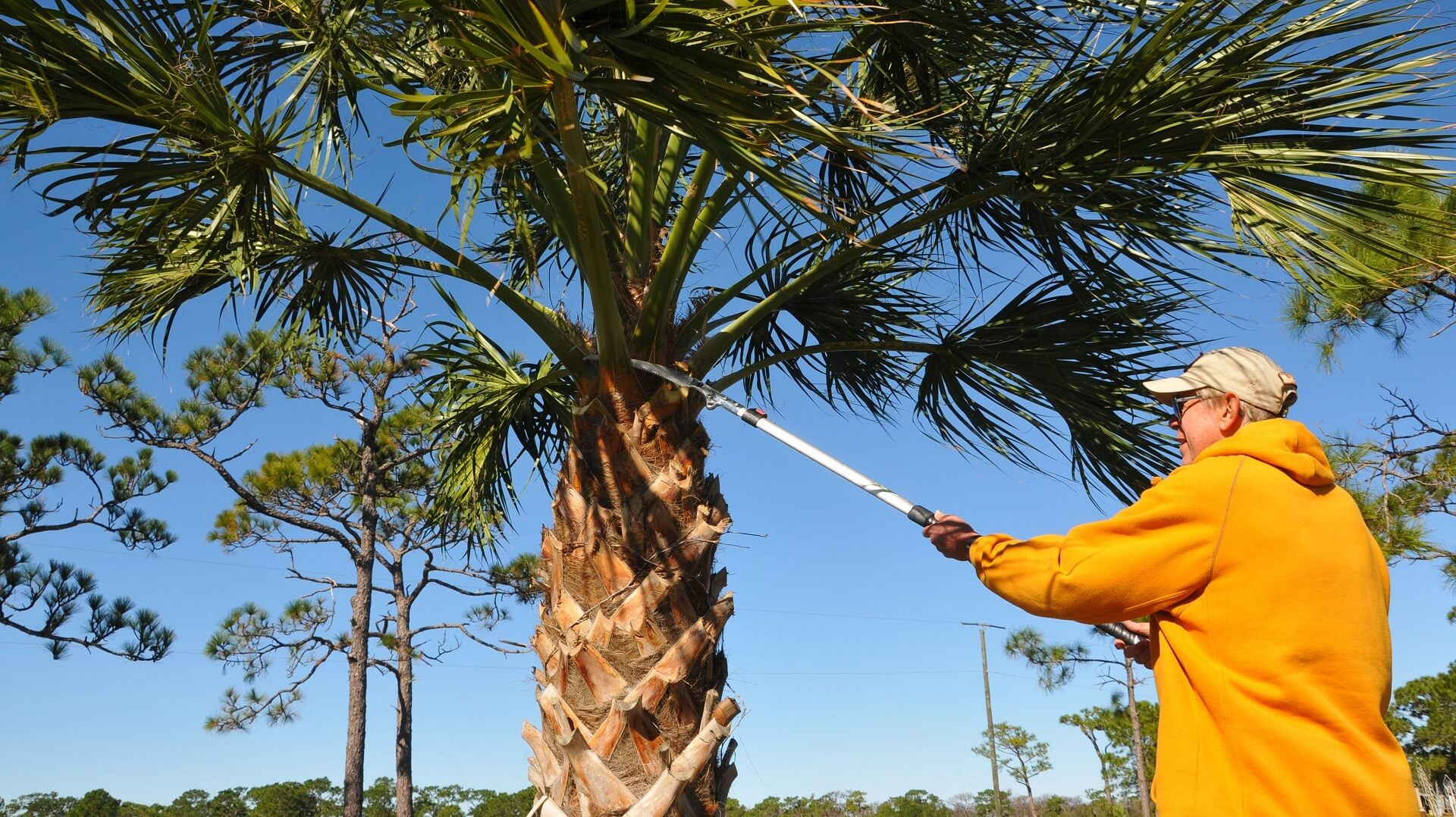 Hope Mills-Fayetteville Tree Trimming and Stump Grinding Services-We Offer Tree Trimming Services, Tree Removal, Tree Pruning, Tree Cutting, Residential and Commercial Tree Trimming Services, Storm Damage, Emergency Tree Removal, Land Clearing, Tree Companies, Tree Care Service, Stump Grinding, and we're the Best Tree Trimming Company Near You Guaranteed!